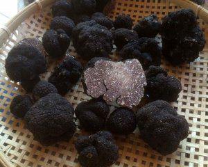 Black Truffle Tuber Mesentericum 30g