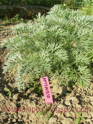 Βότανο Αρτεμισία (Αψιθιά) 40g