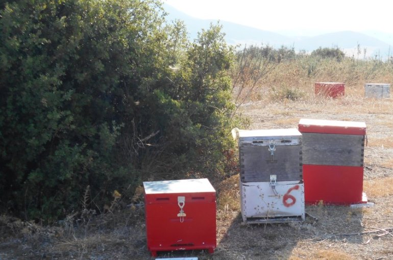 Where to place beehives