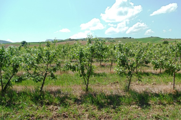 How to grow Apple Trees for Profit
