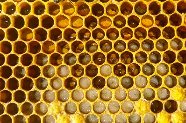 How and when to harvest honey