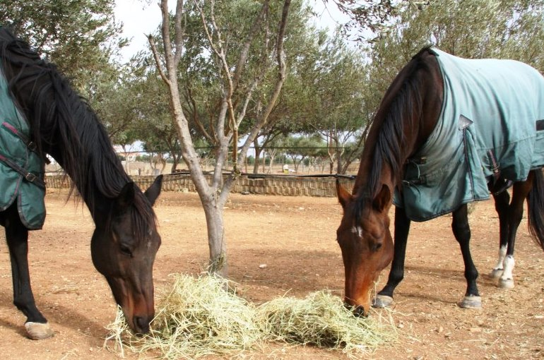 Types of horse feed