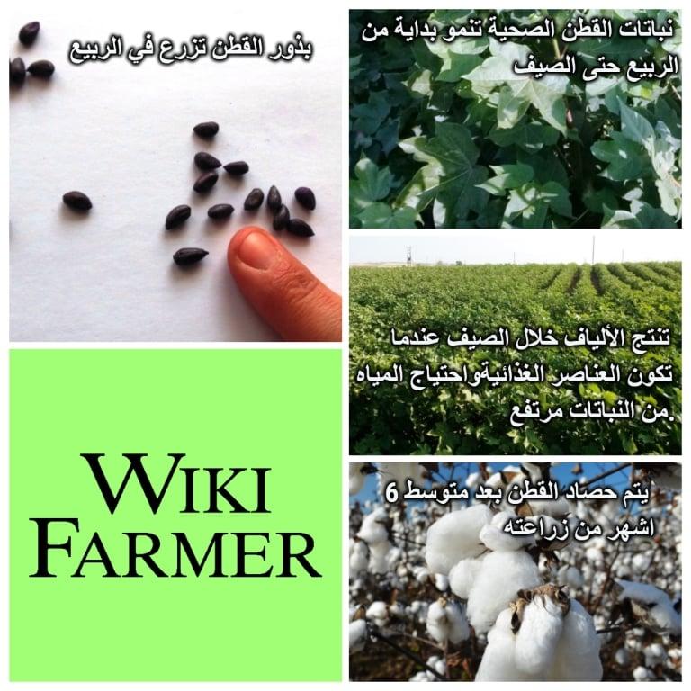 كنية زرافة موقع زراعة البذور في القطن Arkansawhogsauce Com