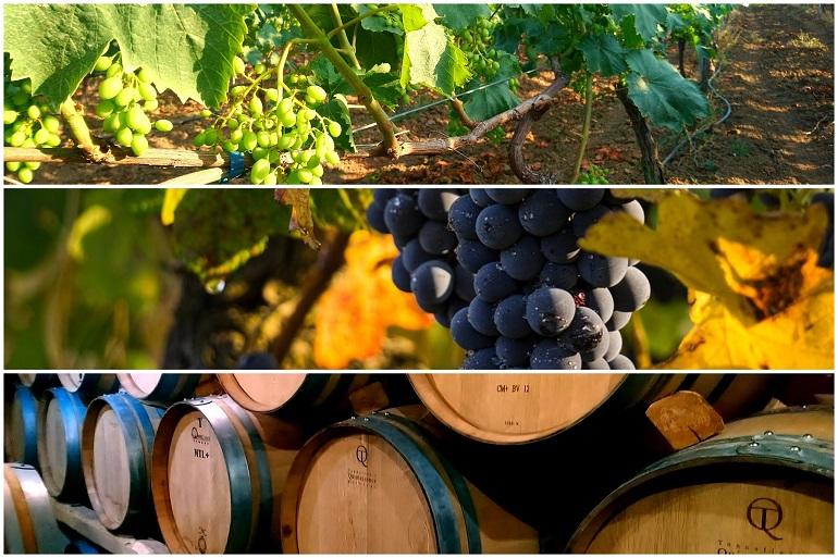 Rendement Raisin De Table Par Hectare Calcul Rendement Vigne